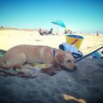 Mandalay Beach, Dog friendly Oxnard